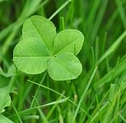 four-leaf-clover-711625__180